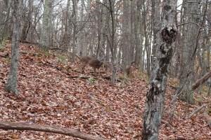 Look, deer!!