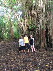 This is one of the largest trees I've ever seen,