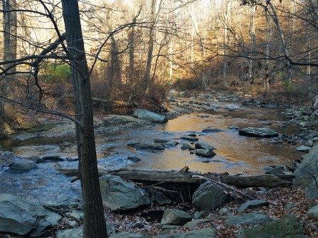 Rock Creek - wild and free.