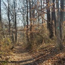 Green blaze on Western Ridge Trail.